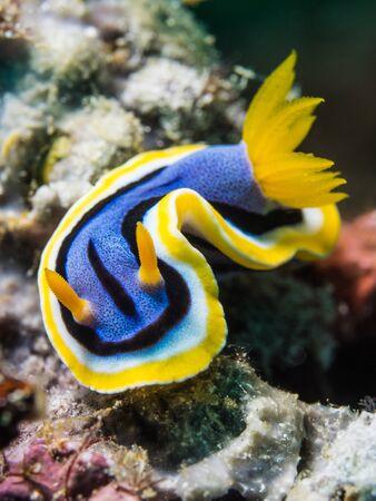 nudibranch: Nudibranch