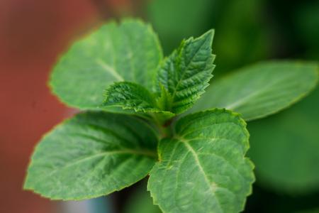 close up shot of flower plant leaves Foto de archivo