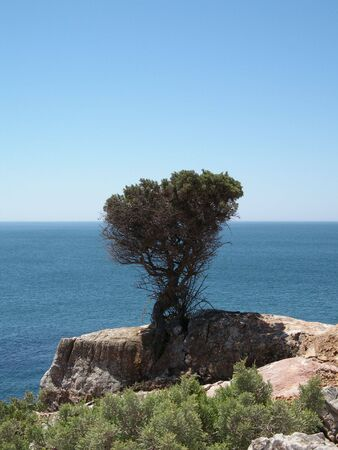 lonelyness: Lonely tree