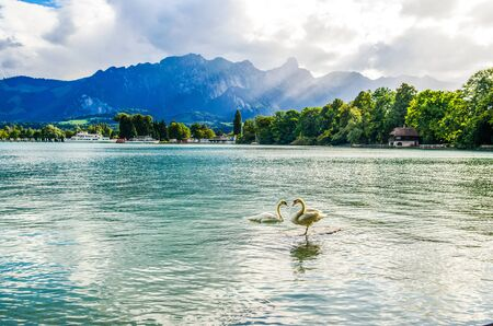 Romantic view on Thunersee (Thuner see), lake of Thun. Two swans make heart. Alps mountain Stockhorn. Spiez, Canton Bern, Switzerland.