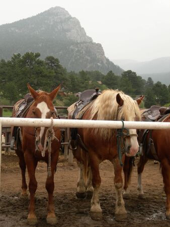horses tide to hitching post with mountain in background