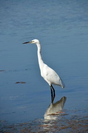 white egret rest on the placid lake water Stock Photo - 14034836