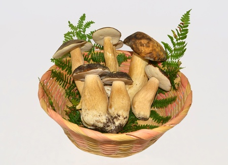 exquisiteness: boletus mushrooms on white background