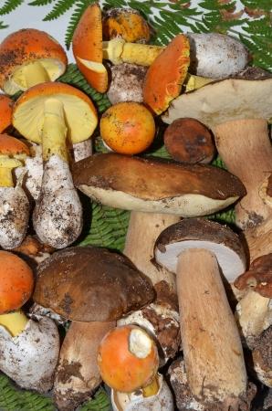 exquisiteness: stock of edible mushrooms closeup Stock Photo