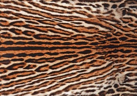 bontjas: bontjas van ocelot achtergrond