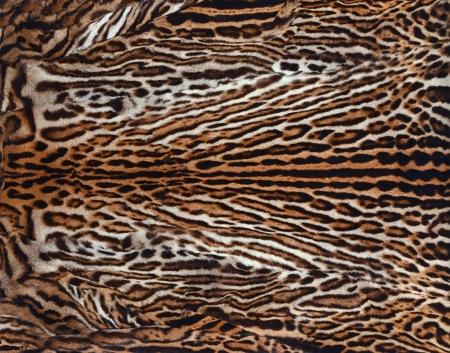 beautiful leopard skin  photo