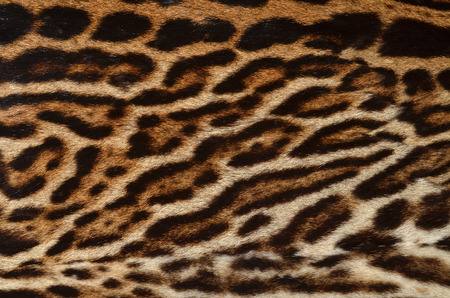 leopard fur background photo