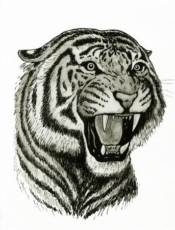 tiger roaring drawing photo