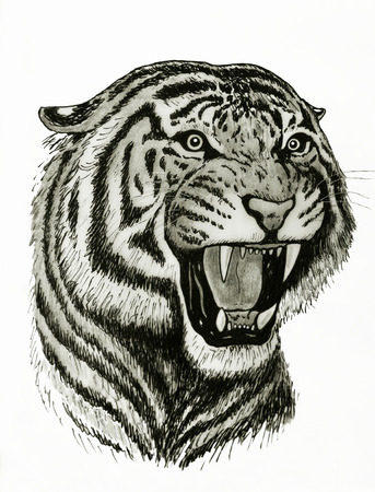 tiger roaring drawing