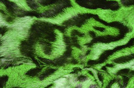 feline: feline fur details