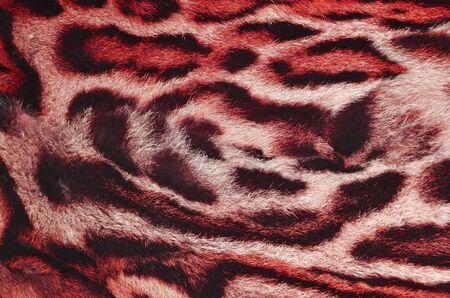 feline: colorful feline fur
