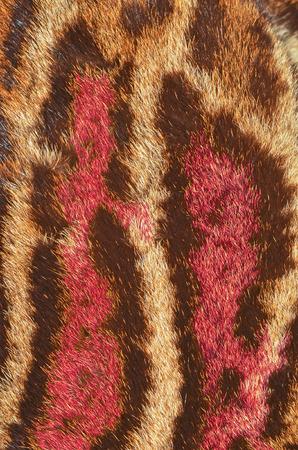 clouded: clouded leopard fur closeup Stock Photo