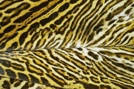 fur coat: ocelot fur coat
