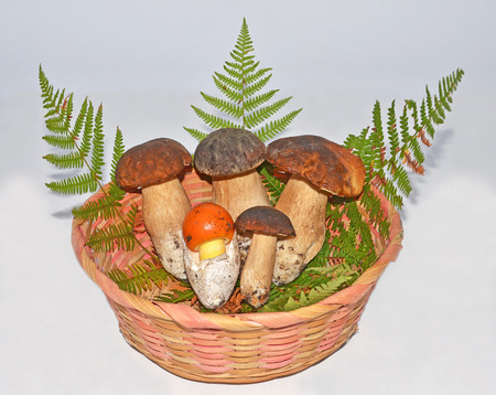 basket with edible boleti mushrooms and egg-shaped mushroom
