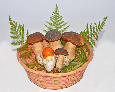 exquisiteness: basket with edible boleti mushrooms and egg-shaped mushroom