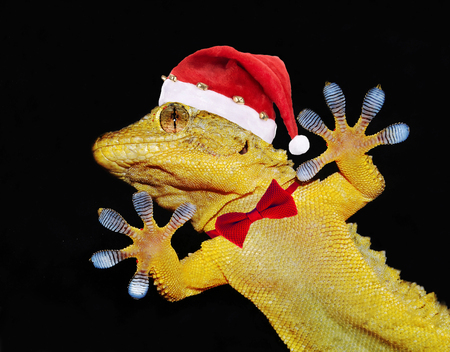 gecko with christmas hat and bow tie that greets everybody