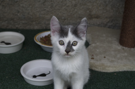 Cat with his bowl 版權商用圖片 - 89323344