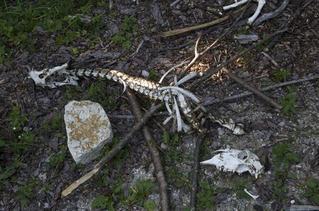 Remains of an animal in the forest