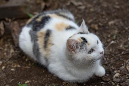 racy: Mottled cat Outdors