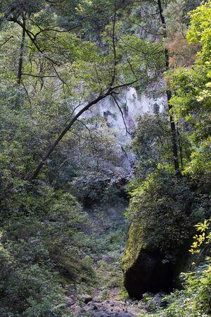 subtropical: Detail of a subtropical forest