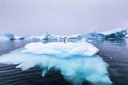 Gentoo Penguin allein auf Eisberg in der Antarktis, malerische gefrorene Landschaft mit blauem Eis und Schneefall, antarktische Halbinsel Standard-Bild