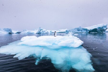 Gentoo Penguin alone on iceberg in Antarctica, scenic frozen landscape with blue ice and snowfall, Antarctic Peninsula Stock Photo
