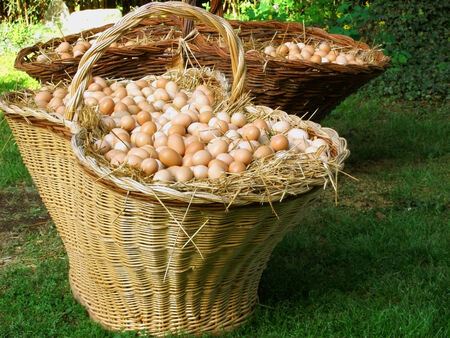 thousands: a big basket with thousands of eggs Stock Photo