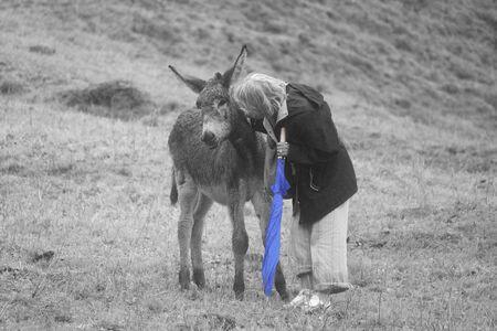 jack ass: una donna che accarezza un asino sulla montagna