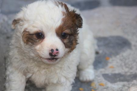 canid: a puppy dog