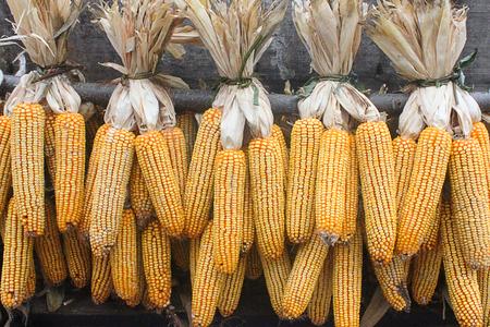 elote: colgando mazorca de maíz