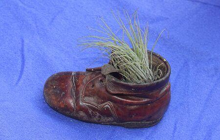 brogue: a little shoe with a little plant