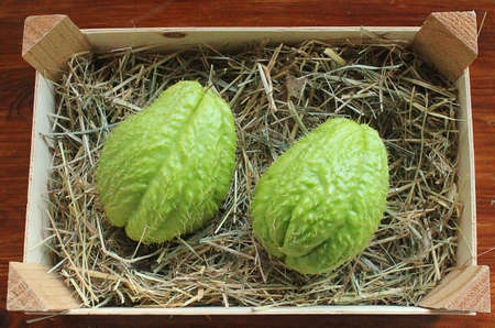 prickly: two prickly cucumber in wooden box Stock Photo