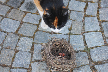 olfactory: a cat in front of a nest Stock Photo