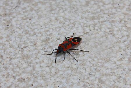 un insetto rosso e nero