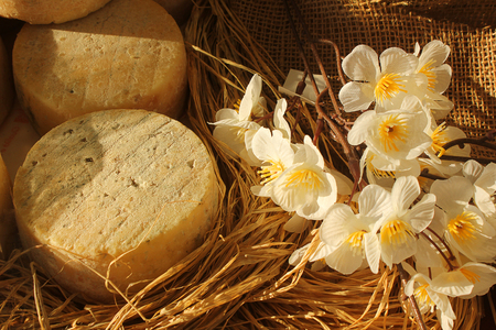 scamorza: some forms of cheese and some flowers