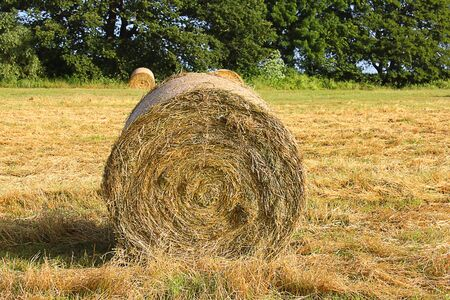 floriculture: an hay bales in the field