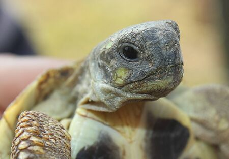 cartilaginous: a turtle close-up