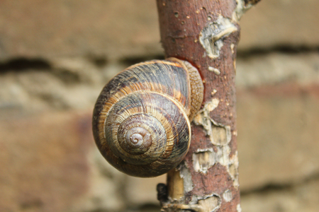 freshwater snails: a snail on the trunk of the tree