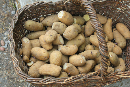 tuberous: some potatoes in the wicker basket