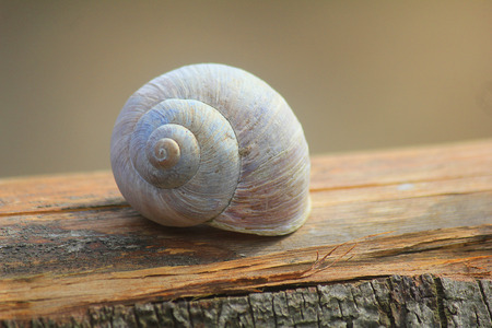 a snail shell on the wood