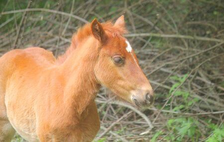 a little foal in the meadow Standard-Bild - 127530529