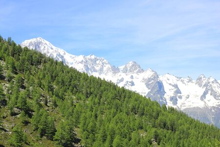 a panorama with Mont Blanc chain and forest Standard-Bild - 127530700
