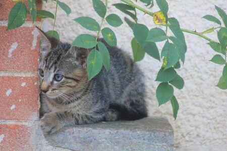 a kitten near the wall under the leaves Standard-Bild - 127530765