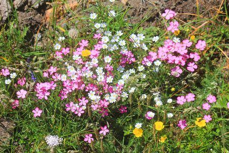 a composition of flowers in the meadow in mountain Standard-Bild - 127530777