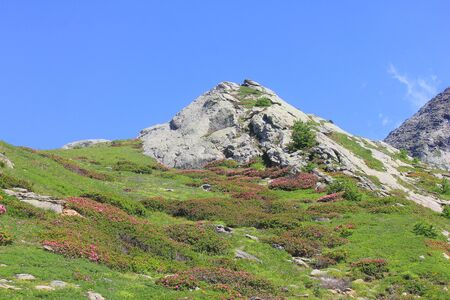 a panorama of mountain with rocks and meadow with rhododentrons Standard-Bild - 127530874