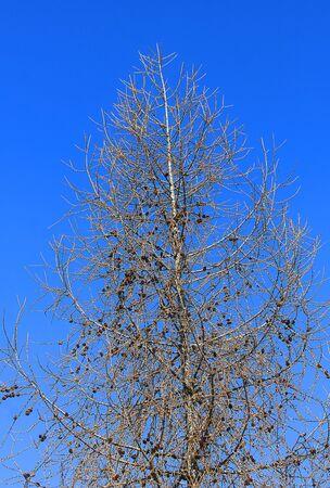 a tree in winter in mountain Standard-Bild