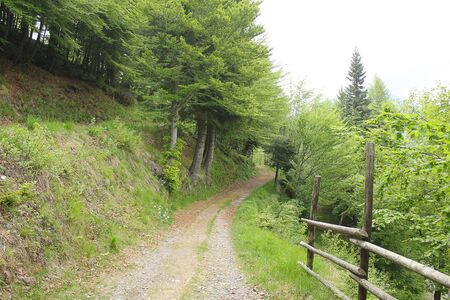 a path in the forest in mountain