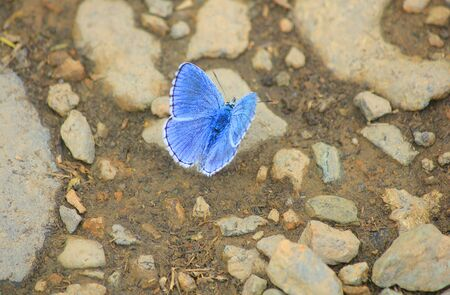 a blue butterfly on the stones Standard-Bild