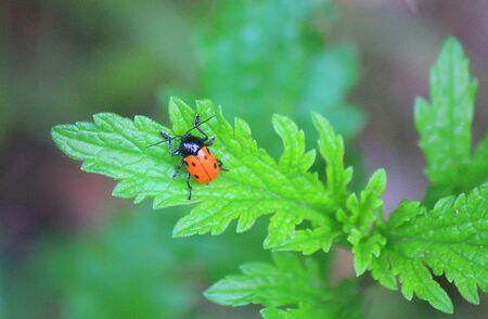 a ladybug on a plant leaf