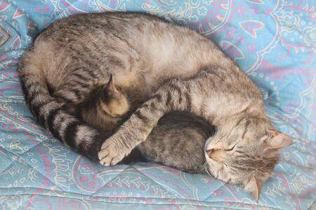 a nursing kitten on the blanket